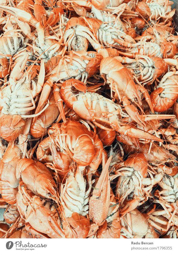 Hummer und Garnelen zum Verkauf im Fischmarkt Farbe Gesunde Ernährung Meer rot Tier Essen natürlich Lebensmittel orange frisch Tiergruppe Bioprodukte Fleisch