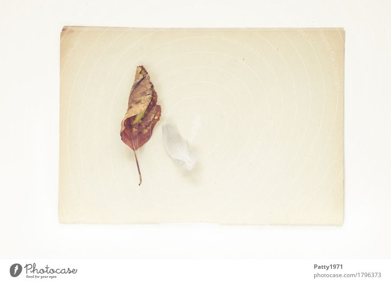 Leichtigkeit Natur Pflanze Blatt Feder Papier Zettel Stillleben Herbarium alt hell trocken weich braun ruhig Nostalgie Verfall Vergänglichkeit