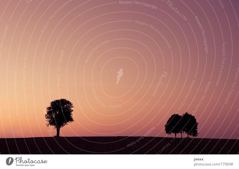 Drei sind keiner zuviel. Natur alt Himmel Baum Pflanze ruhig Park Landschaft Zufriedenheit Stimmung Energie frei paarweise Pause Idylle Menschenleer