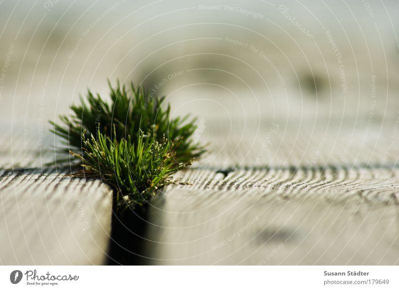 Grasbüschel Pflanze Strand Blatt Wiese Gras Holz See Park Küste Insel Schwimmbad Sträucher Steg Angst Seeufer Furche