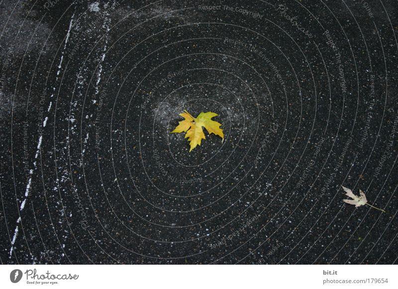 LEUCHTEND EINSAM Pflanze Blatt schwarz gelb Herbst Wand Umwelt Mauer Traurigkeit Beton liegen Baustelle Trauer fallen Asphalt Handwerk