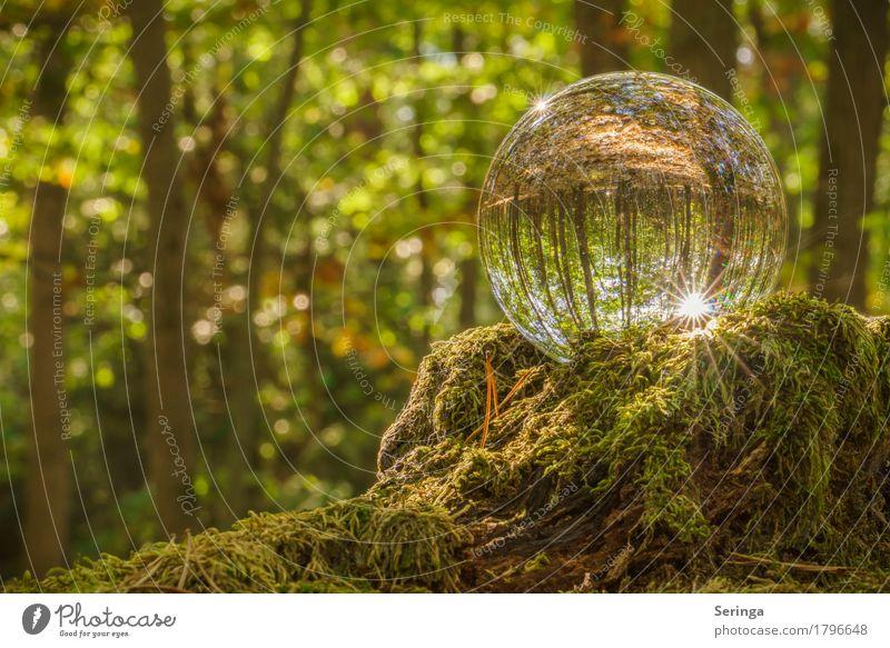 Waldzauber durch die Glaskugel Umwelt Natur Landschaft Pflanze Tier Sonne Sonnenlicht Sommer Herbst Baum Gras Moos Kugel Stimmung Reflexion & Spiegelung