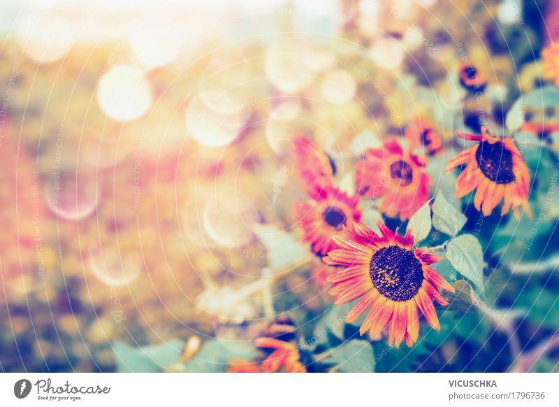 Herbst rote Sonnenblumen im Graten Natur Pflanze Sommer schön Blume Blatt gelb Lifestyle Garten Design Park Schönes Wetter
