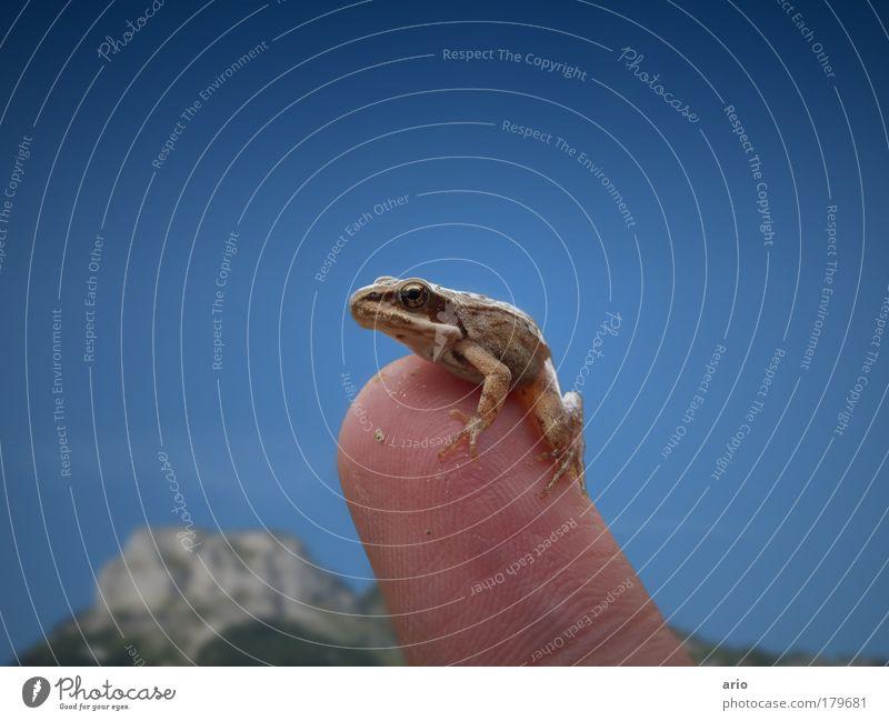 Nun mach schon... Tier Finger Küssen Wildtier Hand Frosch Wolkenloser Himmel