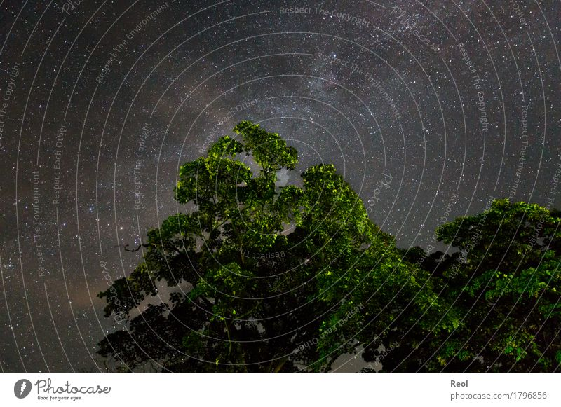 Sternenhimmel Natur Landschaft Pflanze Urelemente Himmel Wolkenloser Himmel Nachthimmel Sommer Herbst Baum Grünpflanze Laubbaum Wald dunkel groß Unendlichkeit