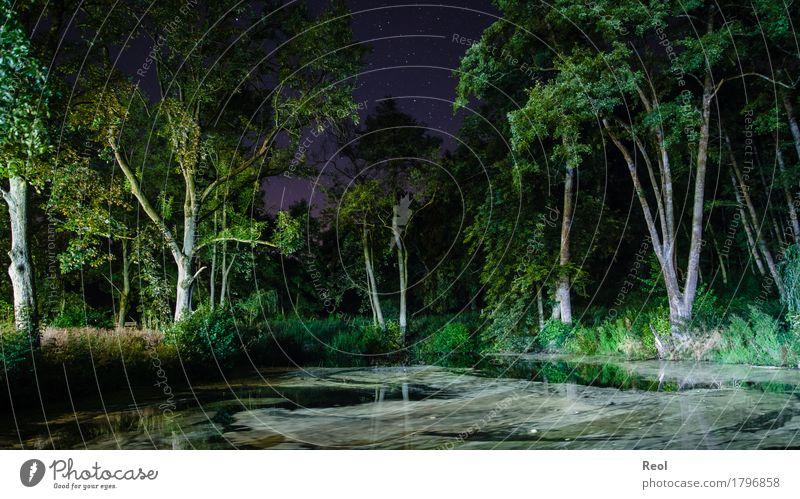 Nächtlicher Wald Natur Sommer grün Baum dunkel Stern bedrohlich Seeufer gruselig Teich Nachthimmel Schattenspiel schemenhaft Seitenlicht