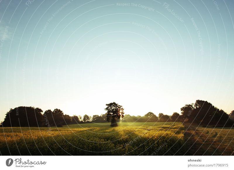 Schöner Morgen Baum Landschaft Erholung Einsamkeit ruhig Wald Herbst Religion & Glaube Horizont träumen Feld Idylle Lebensfreude Schönes Wetter Hoffnung
