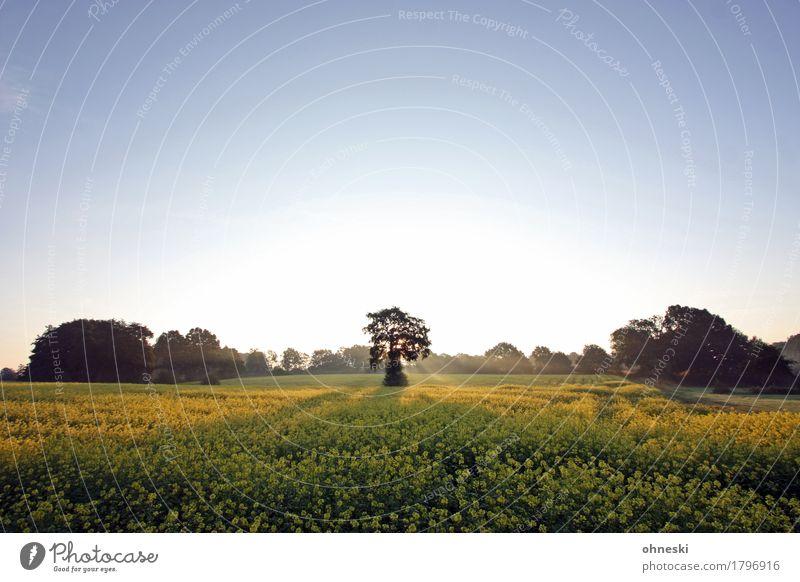 Morgens Natur Landschaft Wolkenloser Himmel Herbst Schönes Wetter Baum Feld Wald Zufriedenheit Lebensfreude friedlich trösten ruhig Glaube träumen Trauer