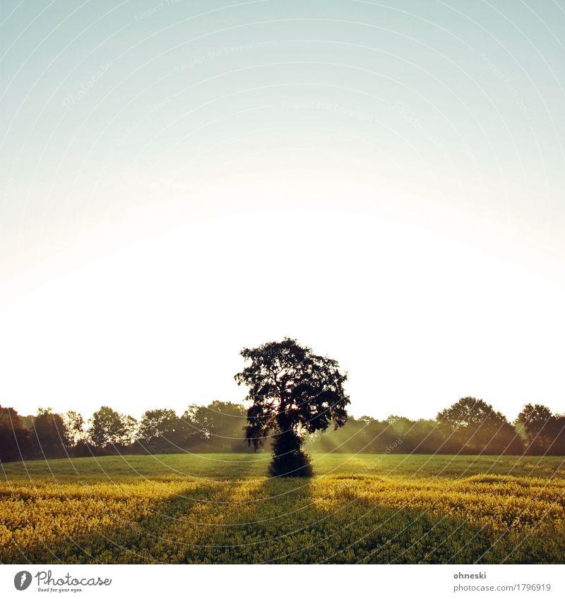 Good Morning Landschaft Himmel Wolkenloser Himmel Wetter Schönes Wetter Baum Feld Vertrauen Romantik friedlich Güte dankbar geduldig ruhig Leben Hoffnung Glaube