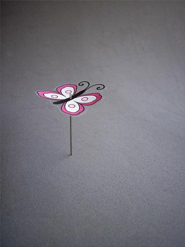 Spießig Farbfoto Studioaufnahme Nahaufnahme Menschenleer Textfreiraum rechts Textfreiraum oben Textfreiraum unten Hintergrund neutral Schmetterlingssammlung