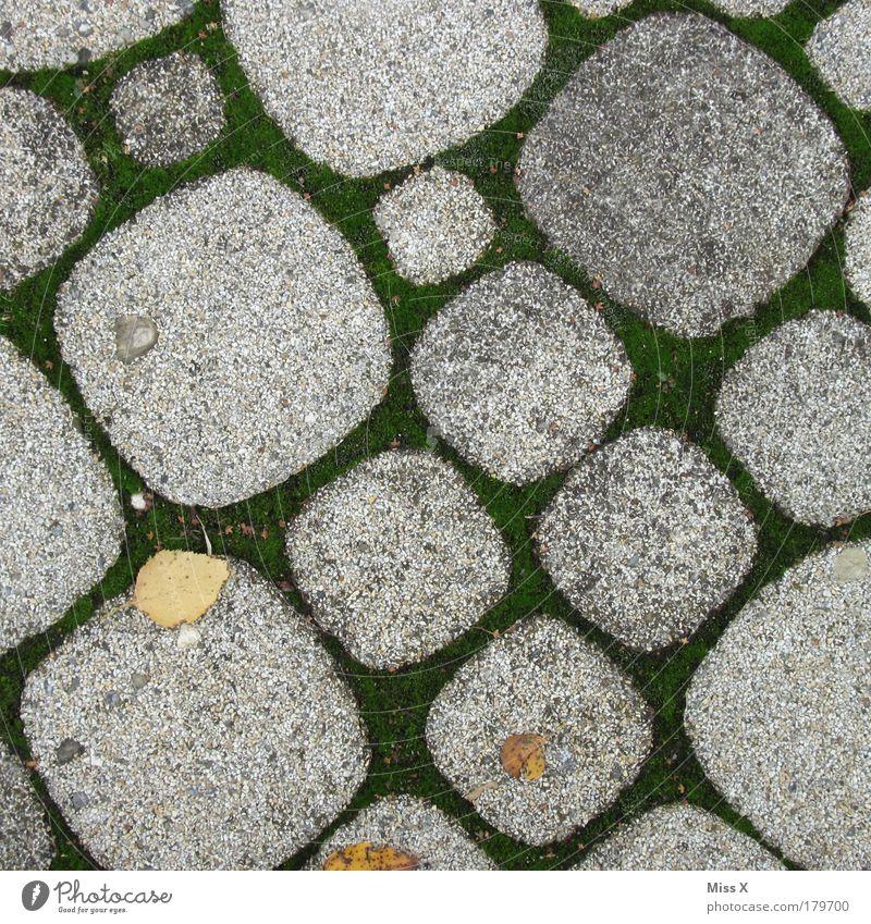 °0o°oOo°0°oO° Natur Pflanze Sommer Blatt Straße kalt Herbst Gras Garten Stein Wege & Pfade Park Platz trist rund