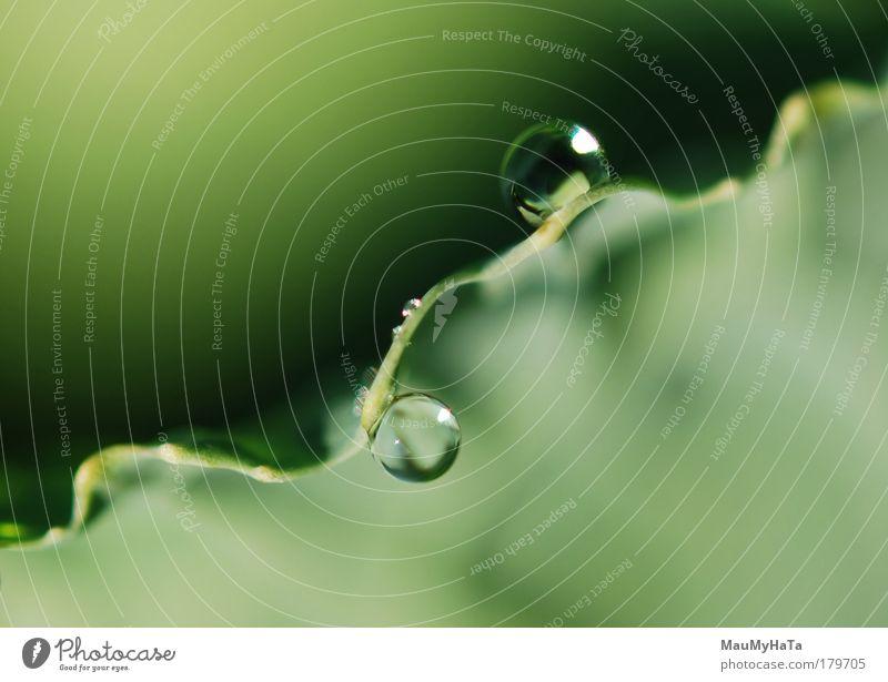 Zwei Tropfen Farbfoto Nahaufnahme Detailaufnahme Makroaufnahme abstrakt Morgen Stil Sonne Natur Pflanze Urelemente Wasser Wassertropfen Herbst Coolness