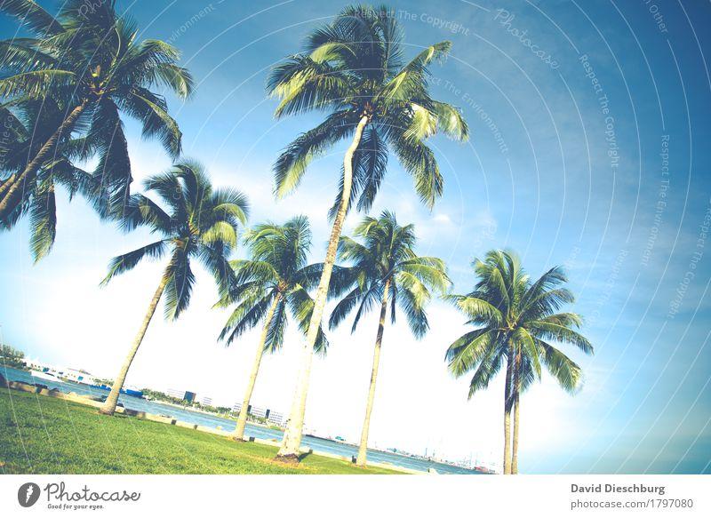 Palmen Ferien & Urlaub & Reisen Pflanze blau Sommer grün Sonne Baum Meer Landschaft Erholung Ferne Strand gelb Tourismus Ausflug USA