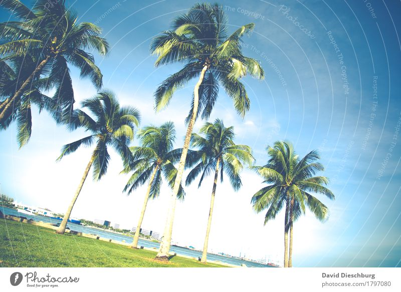 Palmen Ferien & Urlaub & Reisen Tourismus Ausflug Abenteuer Ferne Sommer Sommerurlaub Sonne Strand Meer Insel Landschaft Wolkenloser Himmel Schönes Wetter