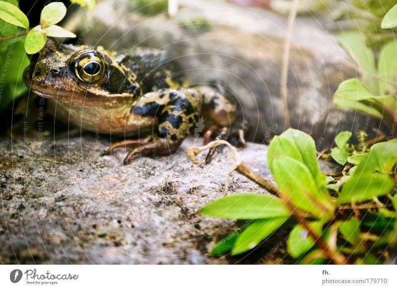 Gold wert! Natur schön grün Pflanze Sommer Auge Tier Leben Frühling Stein braun Umwelt gold ästhetisch beobachten fangen