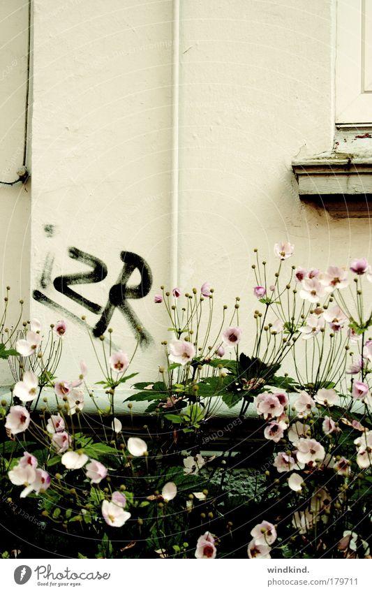 (to) be discovered Natur schön Pflanze Sommer Blume Haus Herbst Leben Fenster Wand Graffiti Mauer träumen Kunst rosa Armut