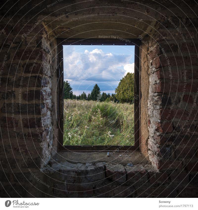 Fenster... natürlich Natur Landschaft Himmel Wolken Sommer Schönes Wetter Baum Gras Sträucher Wiese Mauer Wand beobachten alt Zerstörung verfallen Backstein