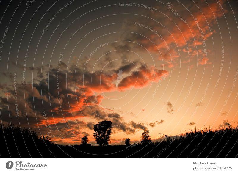 Sonnenuntergang Natur Himmel rot Sommer ruhig schwarz Wolken gelb springen Wärme Landschaft Feld Klima Kitsch Idylle