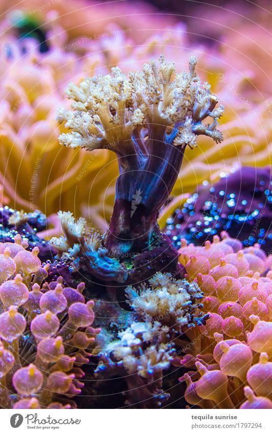Meerbaum Pflanze Wasser Baum Blume exotisch Wasserpflanze Riff Korallenriff mehrfarbig violett rosa Anemonen Wald tauchen Farbfoto Detailaufnahme Makroaufnahme