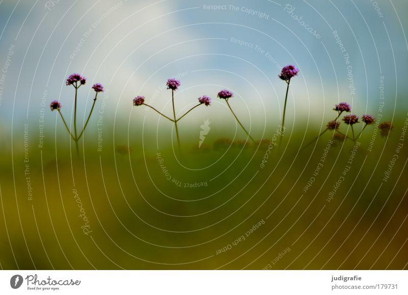 Wiese Natur Blume Pflanze Sommer Wiese Blüte Gras Umwelt Wachstum Duft verstecken Optimismus strecken