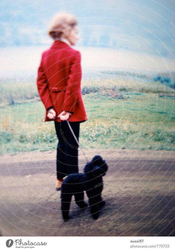 Core Pudel Hund Gassi gehen Spaziergang Dame elegant Unschärfe liquide