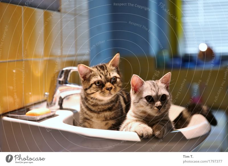 Badetag Tier Haustier Katze Tiergesicht 2 Tierpaar Tierjunges Tierfamilie Zufriedenheit Vertrauen Waschbecken Farbfoto Innenaufnahme Menschenleer Abend