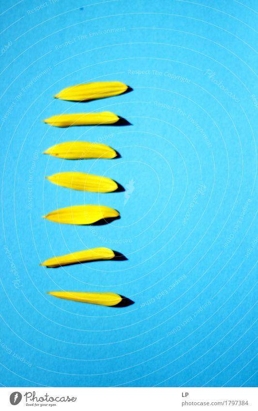 Gelb Blau Stil Design Freude Gesundheit Alternativmedizin Wellness Leben harmonisch Wohlgefühl Sommer Dekoration & Verzierung Kunst Kunstwerk Blütenblätter