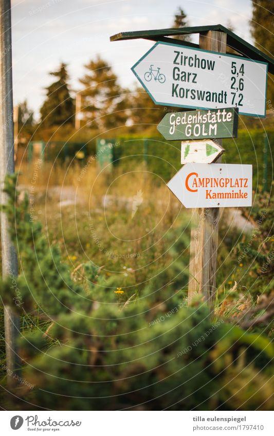 Urlaub wär jetzt schön Natur Ferien & Urlaub & Reisen Pflanze Sommer grün Baum Erholung Einsamkeit ruhig Wiese Gras Holz Tourismus Stimmung Ausflug Feld