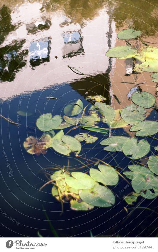 upside down Natur Wasser schön Stadt blau Pflanze Sommer ruhig Blatt Haus Erholung Wand Fenster Mauer rosa Fassade