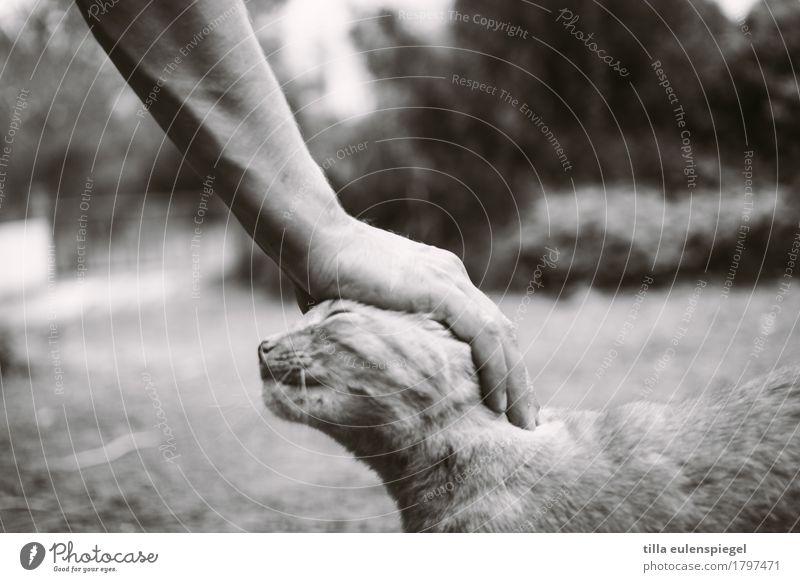 Streicheleinheit Katze Mensch Hand Tier Gefühle Garten Freundschaft Kopf Zufriedenheit Arme genießen weich berühren Gelassenheit Vertrauen Fell