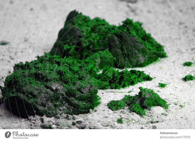 grüner Kot grün Gesundheit Kot Ausscheidungen