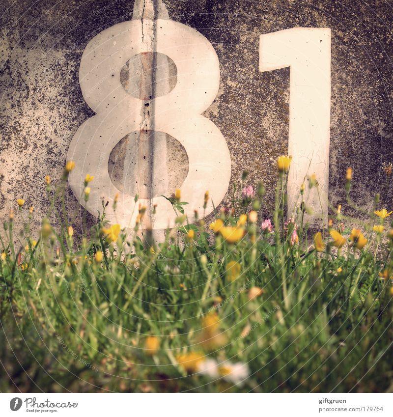 thallium weiß Blume Pflanze Wiese Gras Mauer Geburtstag Beton Schriftzeichen Information Ziffern & Zahlen Zeichen Blühend Quadrat Furche rechnen