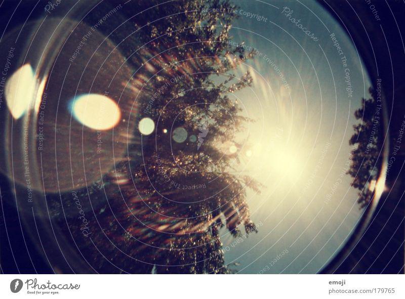 Sonne, hierhin! Himmel blau Baum Sommer gelb Herbst Wärme hell analog Wolkenloser Himmel Lomografie Blendenfleck Sonnenlicht Sonnenfleck