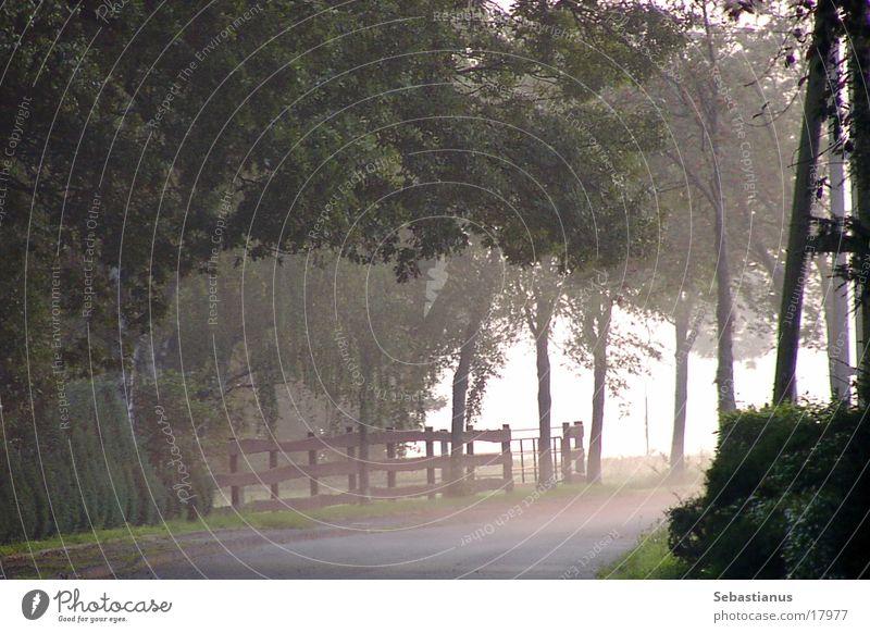 Nebel am Niederrhein Baum Weide Strommast Kreis Wesel
