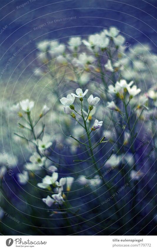 blütenzauber Natur Wasser schön weiß Blume blau Pflanze Sommer ruhig Blüte träumen Park Umwelt natürlich Idylle Seeufer