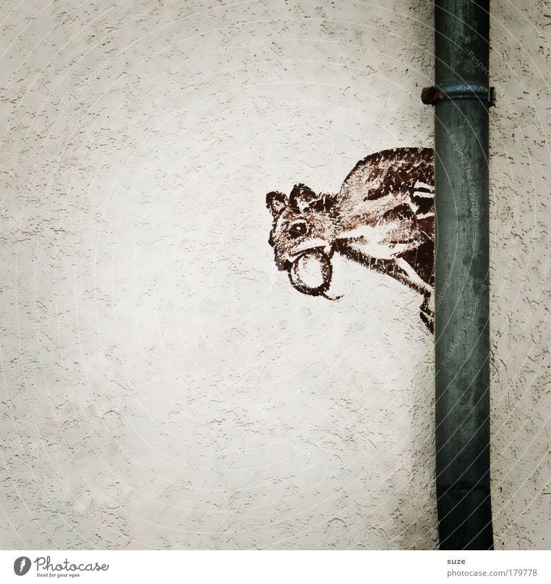 Steinbeißer Mauer Wand Fassade Tier Wildtier Eichhörnchen Nagetiere 1 Zeichen Graffiti lustig niedlich braun grau weiß Zeichnung Wandmalereien Straßenkunst Putz
