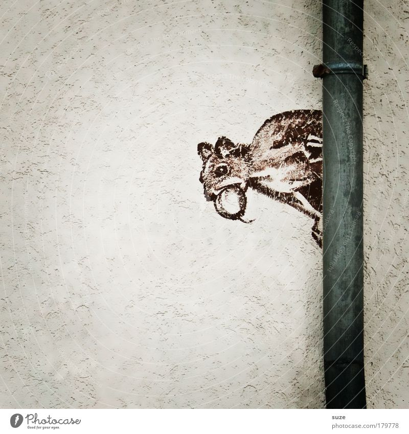 Steinbeißer weiß Tier Graffiti Wand Mauer lustig grau braun Fassade Wildtier niedlich Grafik u. Illustration Zeichen graphisch Putz Wasserrinne