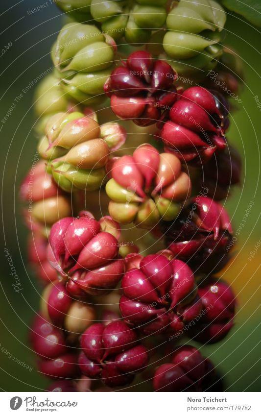 Blickfang Natur schön Blume Pflanze rot Sommer Blatt Tier Herbst Blüte Park Landschaft Umwelt verrückt frisch Fröhlichkeit