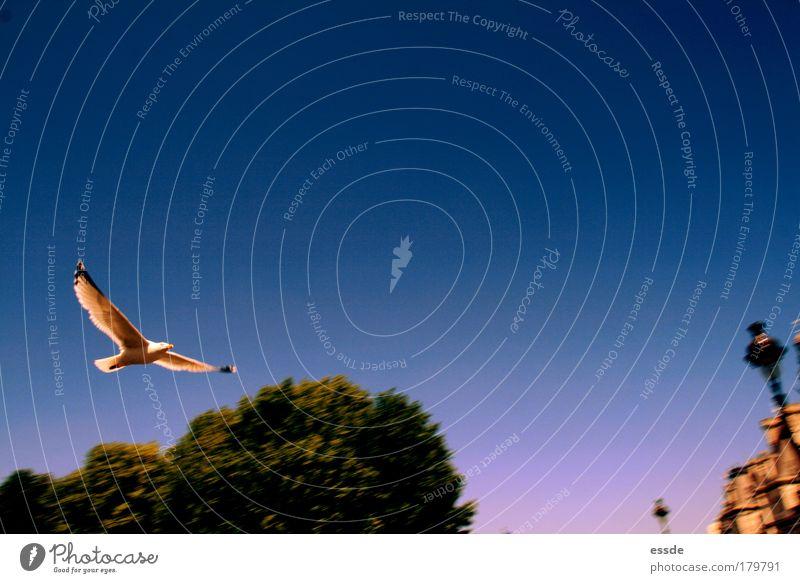 par(ad)isvogel Baum blau Sommer Tier Leben Bewegung Vogel wandern rosa elegant Umwelt fliegen gold Energie frei hoch