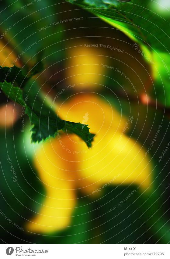Gelb Grün Farbfoto mehrfarbig Außenaufnahme Nahaufnahme Detailaufnahme Makroaufnahme Menschenleer Textfreiraum rechts Textfreiraum unten Dämmerung