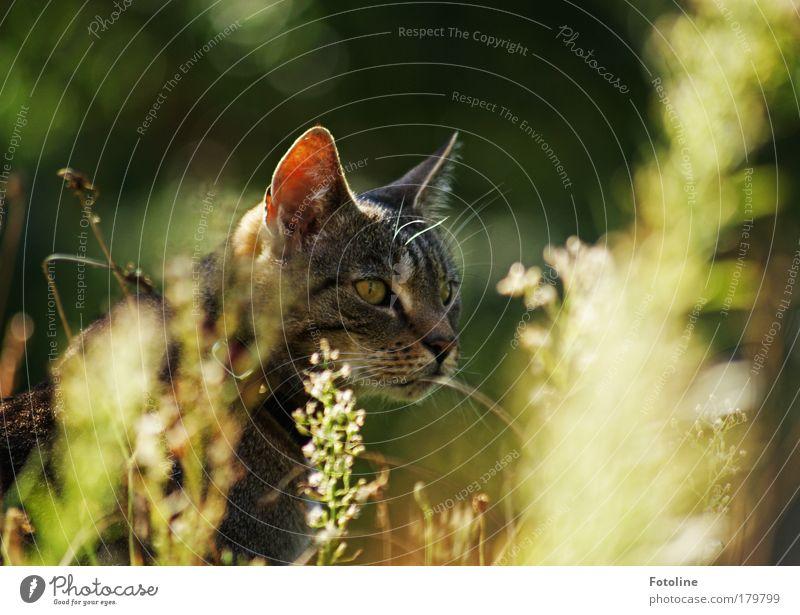 Anschleichen Katze Natur schön Pflanze Sonne Sommer Tier Umwelt Wiese Herbst Gras Wärme Garten Frühling hell Park