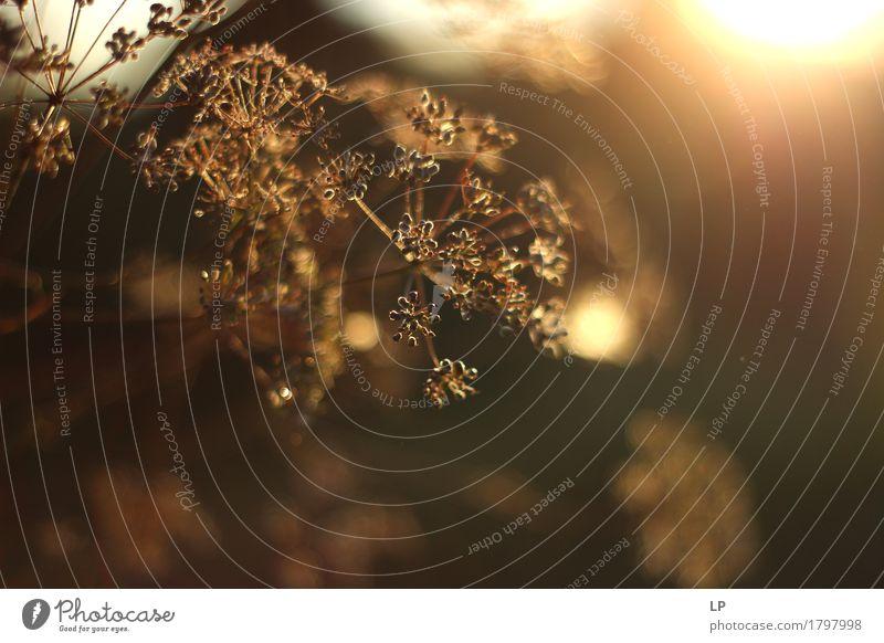 Sonnenuntergang 1 Lifestyle Wellness harmonisch Wohlgefühl Zufriedenheit Sinnesorgane Erholung ruhig Meditation Umwelt Natur Pflanze Urelemente Frühling Sommer