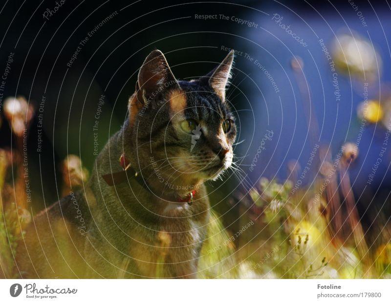 111 :-) Katze Natur schön Sommer Tier Umwelt Wiese Herbst Gras Wärme Garten Frühling hell Park elegant ästhetisch
