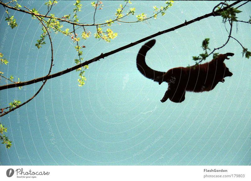 Vari Tier springen fliegen wild Affen Wildtier Vari