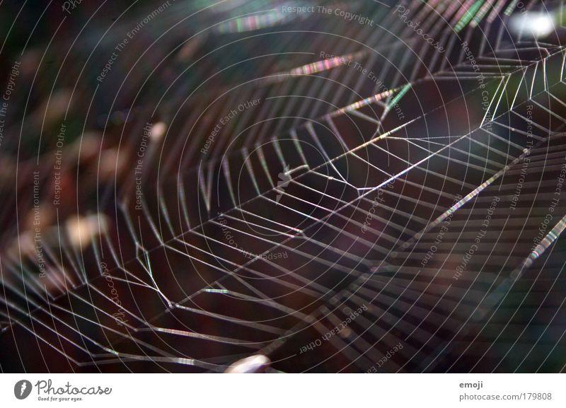 schimmernd Natur weiß braun Umwelt Netzwerk silber Spinne Spinnennetz Tier