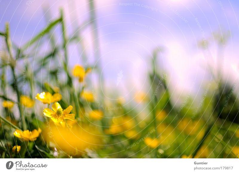 Purple Sky Natur Himmel weiß Blume grün Pflanze Sommer ruhig Blatt Wolken gelb Erholung Wiese Blüte Gras Glück
