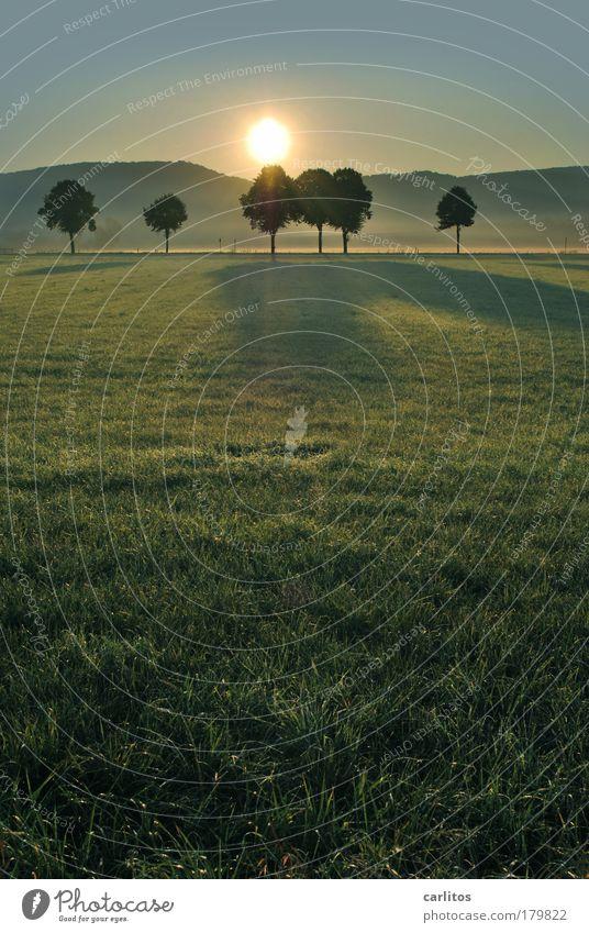 Gegenlicht blau grün Sonne Baum Erholung Einsamkeit Landschaft ruhig Ferne kalt Wiese Freiheit Horizont Zufriedenheit ästhetisch Sonnenaufgang