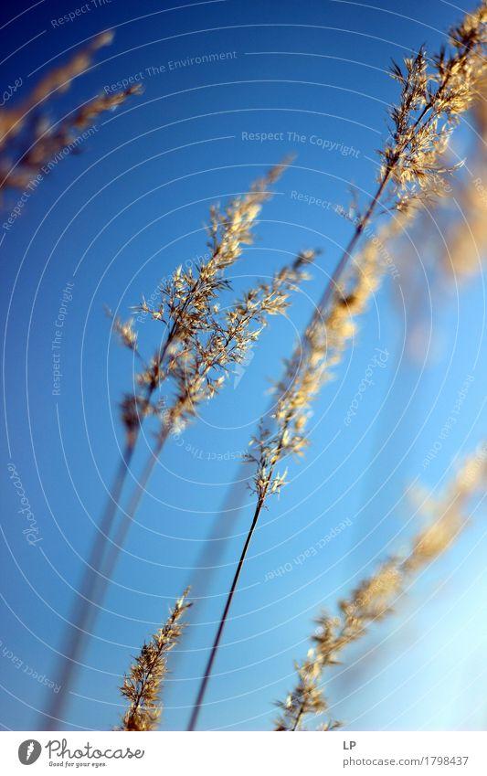 windig 3 Natur Pflanze Sommer Erholung ruhig Umwelt Wärme Leben Frühling Gefühle Herbst Lifestyle feminin Stimmung wild Zufriedenheit