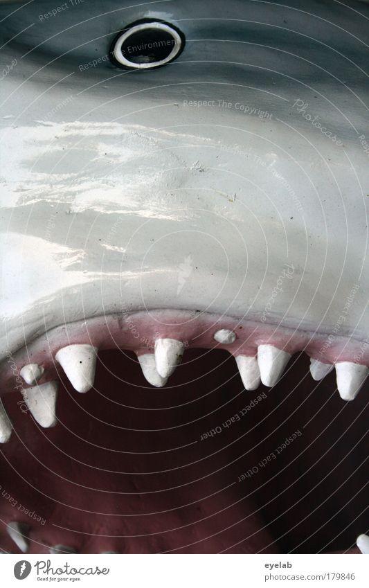 Und der Haifisch, der hat... Tier Auge dunkel grau Unterwasseraufnahme Angst glänzend nass wild Wildtier Geschwindigkeit Fisch bedrohlich Spitze Kitsch Tiergesicht