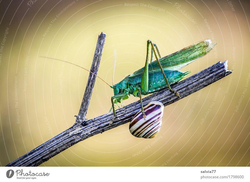 Begegnung Natur Pflanze grün Tier gelb außergewöhnlich braun Flügel beobachten berühren Schutz entdecken Stengel Tiergesicht skurril Schnecke